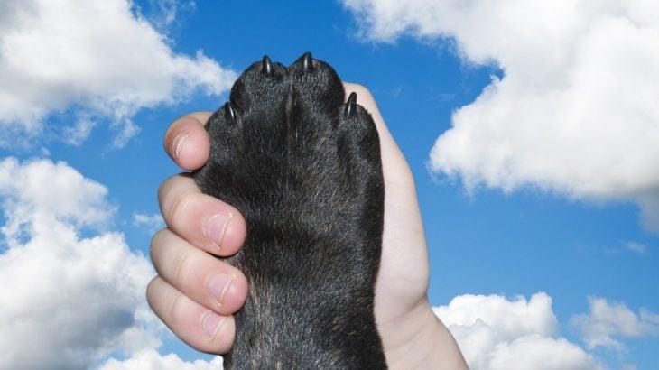犬ブログスタート! 第1話「わんこが飼いたい!」