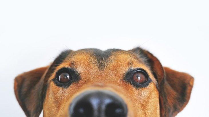 室内犬で飼いやすい犬種はどれ?